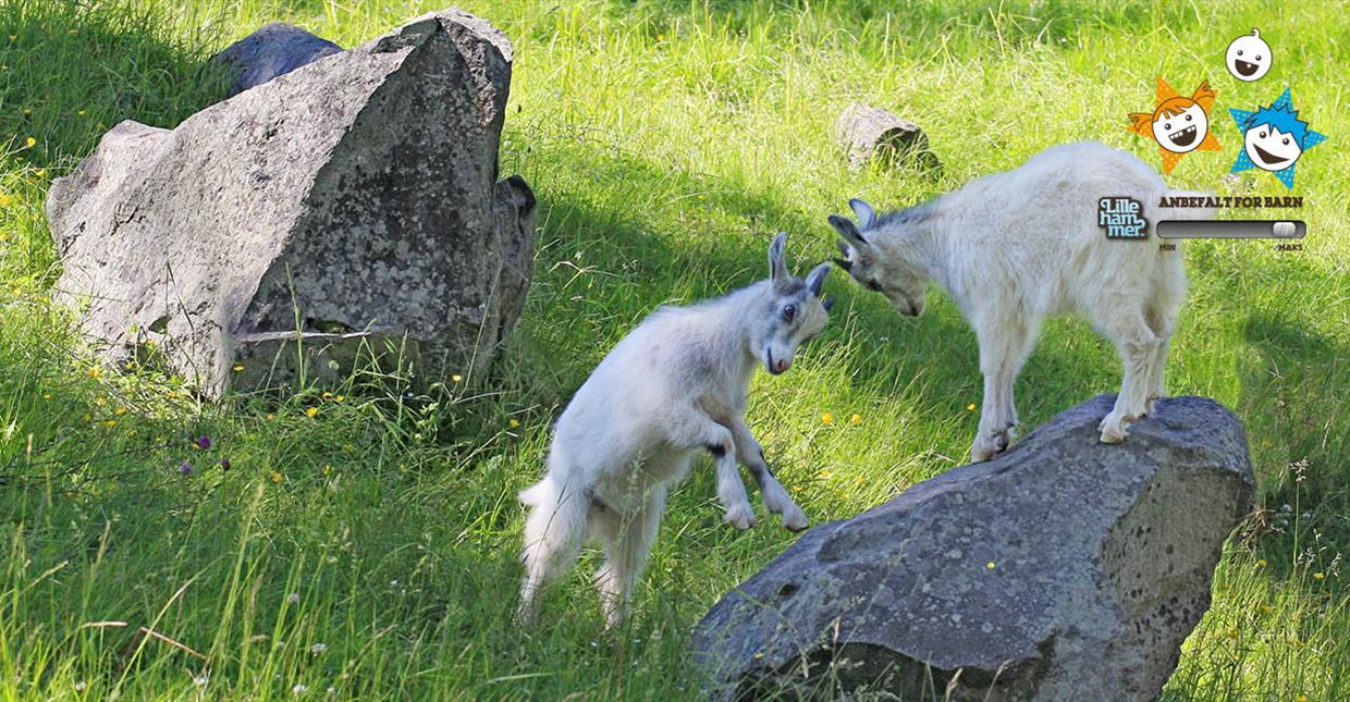 Goats at Maihaugen