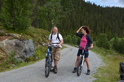 Short guided trip in the forest – biking, fishing, hiking