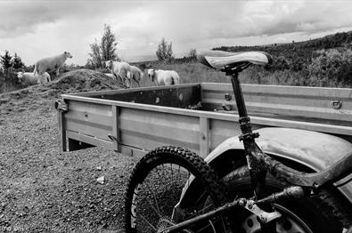 Bike leaned against railings with sheep in the background.