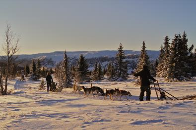 Dog Sleigh Riding, Gålå