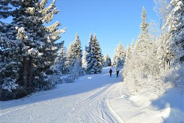 Cross country skiing at Nordseter