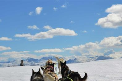 Dog sledding in beautiful winter landscape