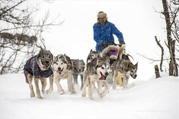 Dog Sledding | Venabu Fjellhotell