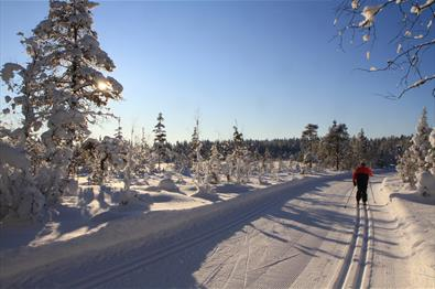 Cross-country Skiing in Lillehammermarka
