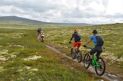 5 mountainbikers cycle along a path on the Venabygdsfjellet.