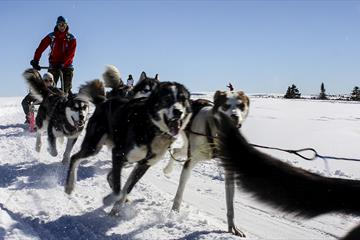 Dog sledding at Sjusjøen Husky Tours